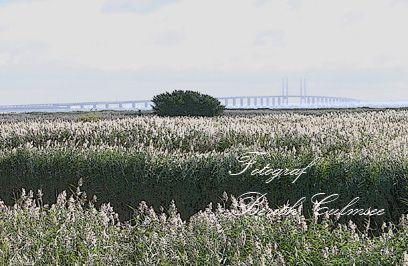 Udsigt til Øresundsbroen.