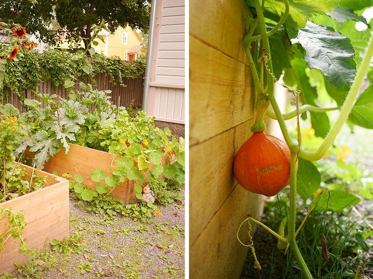 My garden in August tuulinenpaiva.fi