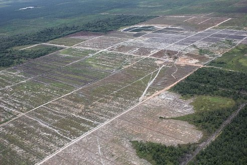 Industrial activities are the principal driver of deforestation and degradation worldwide, but subsistence agriculture and fuelwood consumption remains an important direct driver of deforestation, especially in Africa.