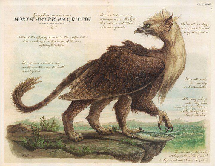 North American Griffin   Tony DiTerlizzi    Arthur Spiderwick's Field Guide Plate XXXII