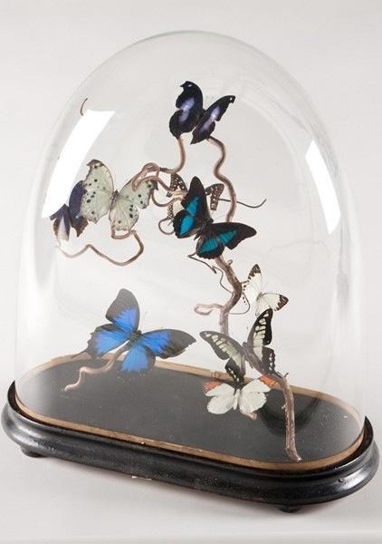 Butterflies what a beautiful idea...