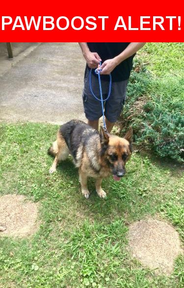 Is this your lost pet? Found in Collegedale, TN 37363. Please spread the word so we can find the owner!  Sweet, friendly, female German Shepherd seems in good health with slight hip dysplasia  Near University Dr & Central Ave