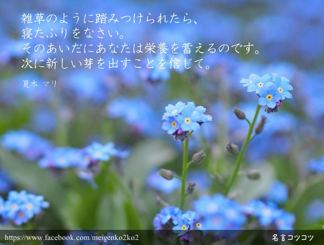 雑草のように踏みつけられたら、 寝たふりをなさい。 そのあいだにあなたは栄養を蓄えるのです。 次に新しい芽を出すことを信じて。 夏木 マリ (女優・歌手)