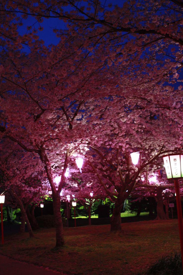 #Toyohashi # Japan #sakuras