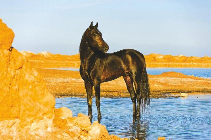 Kalendář 2015 - Kůň, koně  http://www.pg.cz/cs/produkt/3054-kone-christiane-slawik-poznamkovy-kalendar-2015-30-x-30-cm