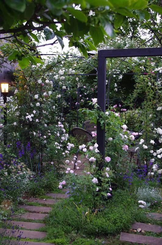 夕方のバラ園   ジャネット   テーブルの上はミニ盆栽   カーディナルリシュリューとブラッシュダマスク     夕方...