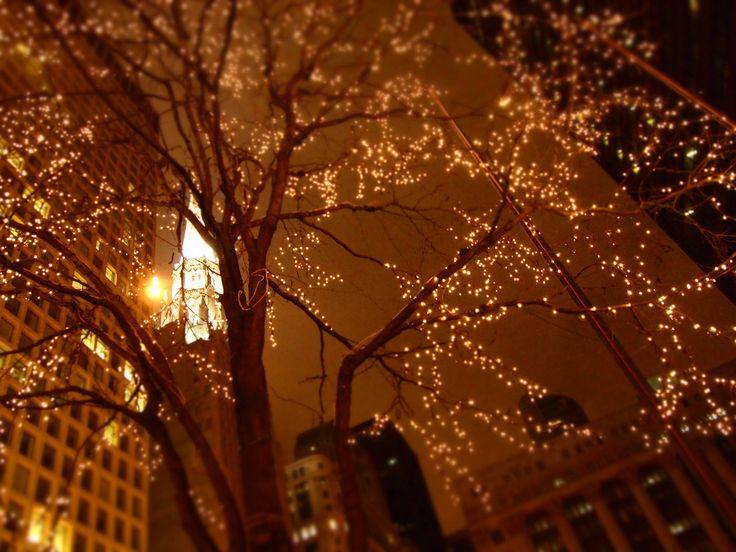 20 best stary trees images on pinterest string lights