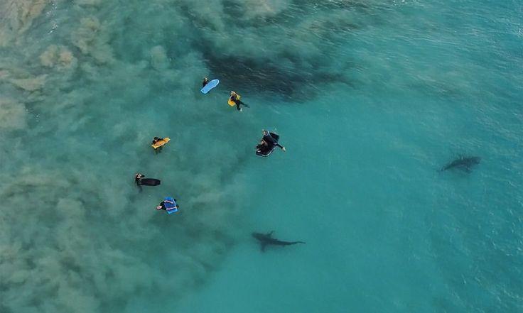 Drone capta momento surreal em que crianças são cercadas por 400 tubarões na Austrália