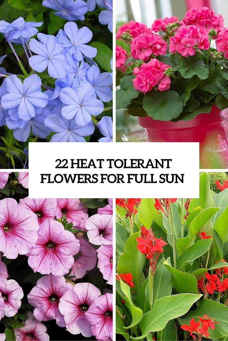 22 heat tolerant flowers for full sun cover Heat
