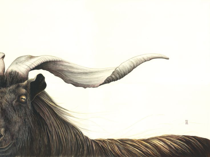 """Nikki McIvor's portrait of a goat is entitled """"Bulletproof Soul"""".  He is available in a large-format print as well as a diminishing supply of free postcards.  www.wildhoneyart.co.nz"""