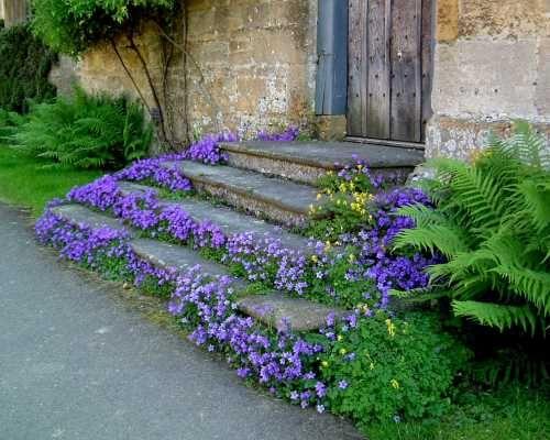 <3Stones Step, Secret Gardens, Flower Gardens, Blue Flower, Front Porches, Gardens Stairs, Step Up, Front Step, Purple Flower