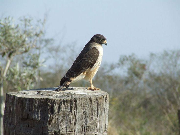 Pantanal, Brazil  | South Pantanal Vacation Package - South Pantanal Tours