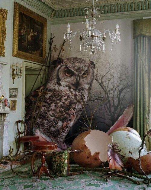 Eagle owl and hatched eggs by Tim Walker Shotover Park, Oxfordshire, 2010