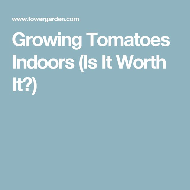 Growing Tomatoes Indoors (Is It Worth It?)