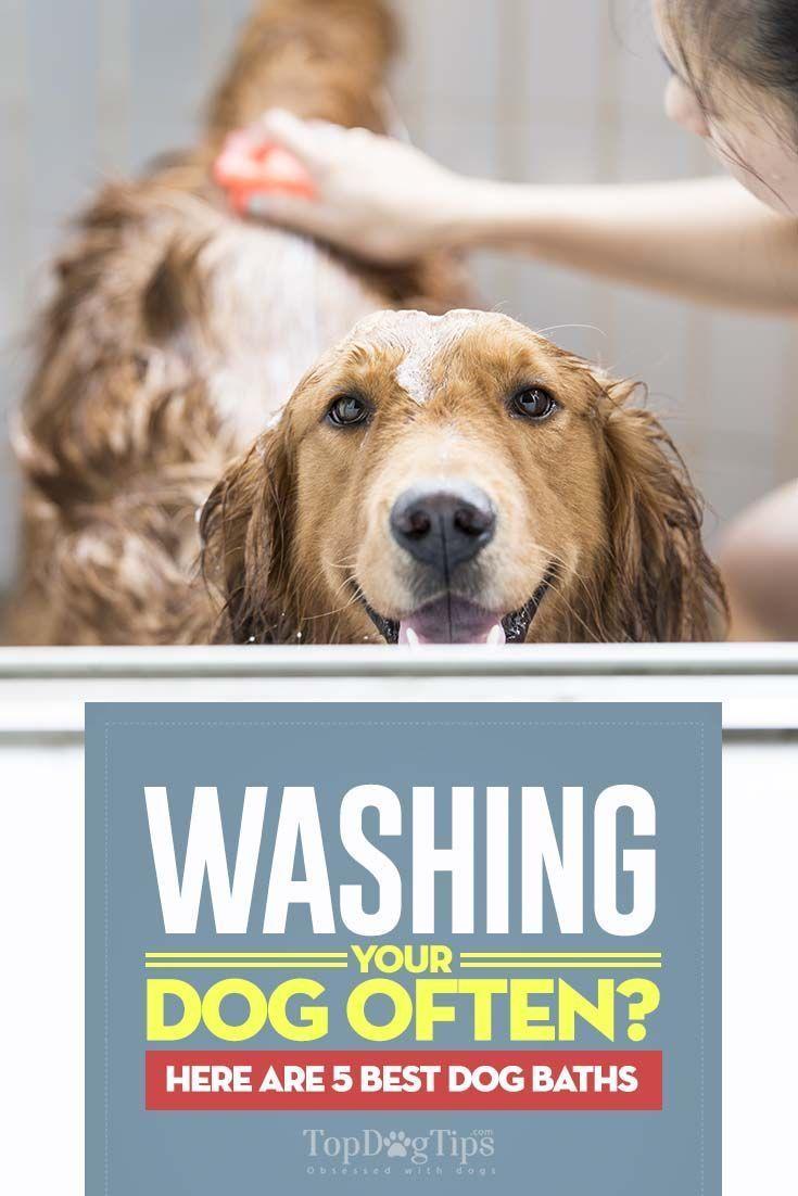 Top 5 Best Dog Baths Pet Grooming Tubs Doggroomingtips Best