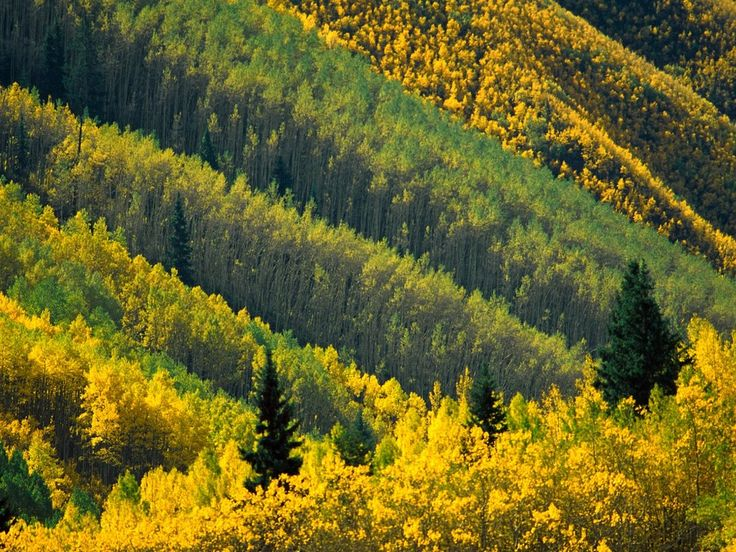 Splash of Gold, Maroon Creek Valley in WRNF, Colorado