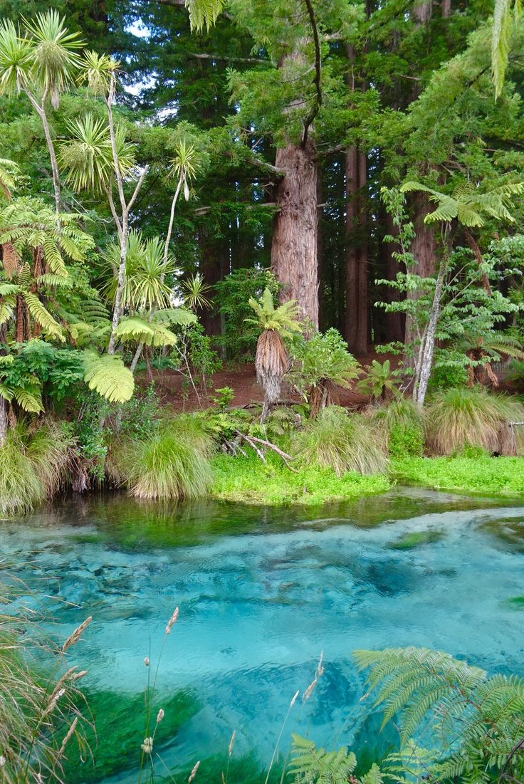 Hamurana Springs // How we spent a day in Rotorua | spinthewindrose.com…