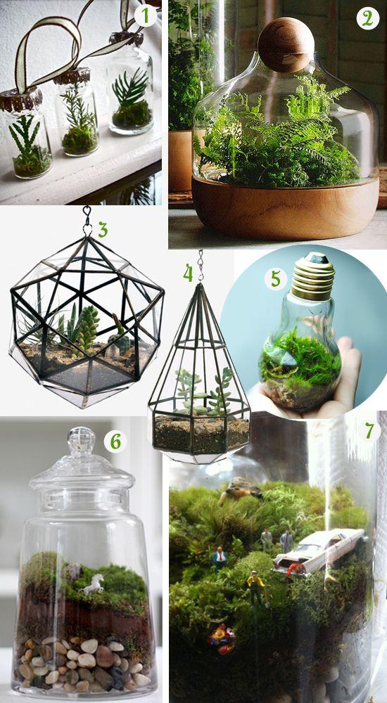 Best 25 terrarium containers ideas on pinterest terrarium ideas terranium ideas and terrarium - Great indoor houseplants ...