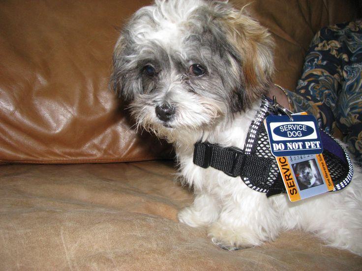 ¿Cómo se convierte un perro en policía?