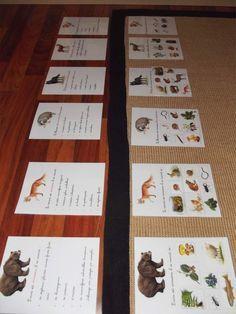 Cartes d'alimentation des animaux de la forêt et classification des animaux (herbivores, omnivores,...)