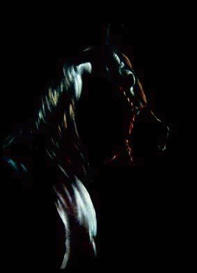 One of my paints: Black Horse at night. Oil on Canvas. Dubai 2004.
