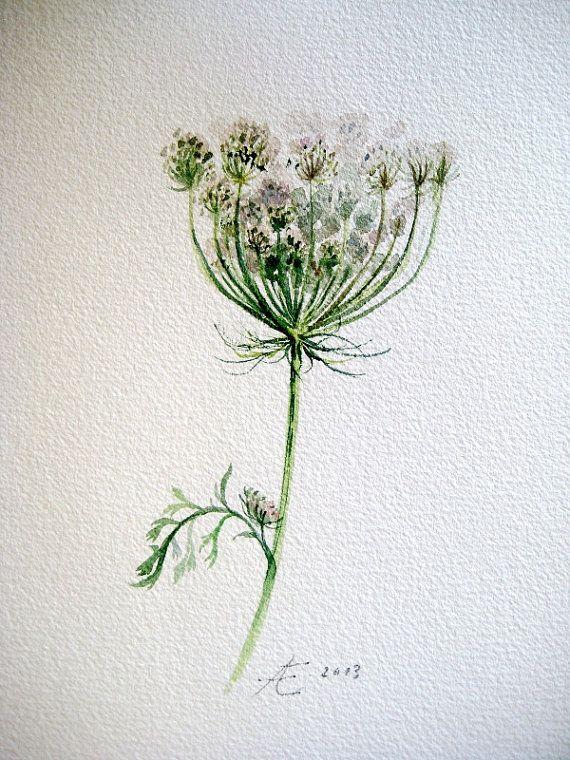 Cordón de la Reina Ana, Acuarela original pintura, ilustración original de Daucus carota, arte botánico