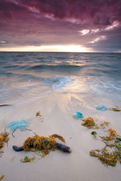 Brighton Beach, Redcliffe (just North of Brisbane), QLD, Australia - watch out for the bluebottles, they sting!!