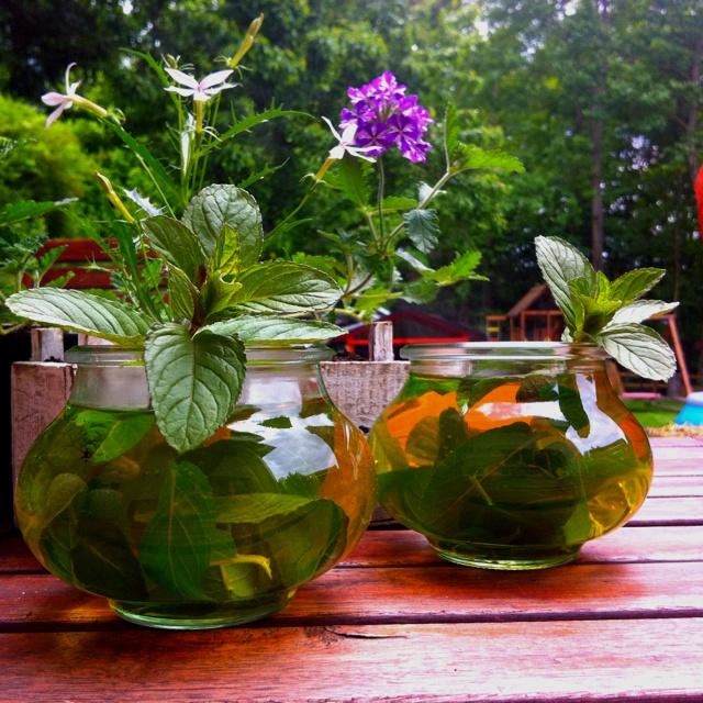 Green tea with fresh Morroccan mint