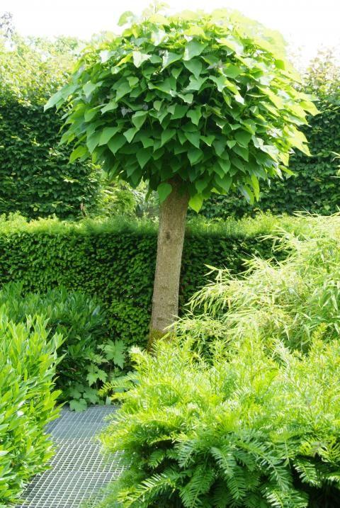 kleine bomen voor in de tuin - Google Search