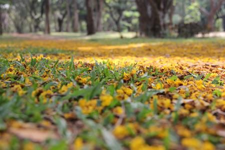 The beauty of Spring Photo by Akhilesh Raja — National Geographic Your Shot