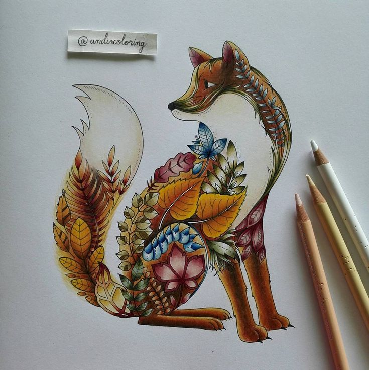 The Fox From Enchanted Forest Coloured With Prismacolor Pencils Enchantedforest