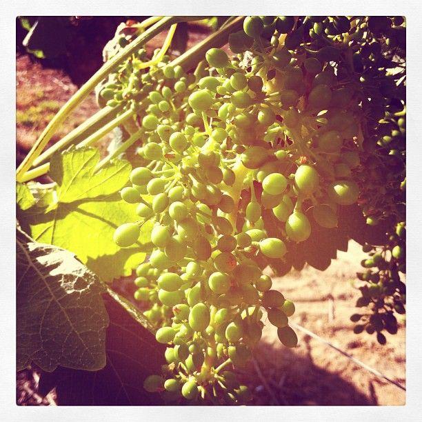 Instagram #temecula #wine #California