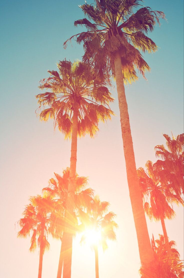 Tumblr iphone wallpaper summer - Background For Iphone