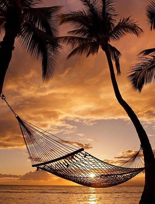 I need to be laying in that hammock!