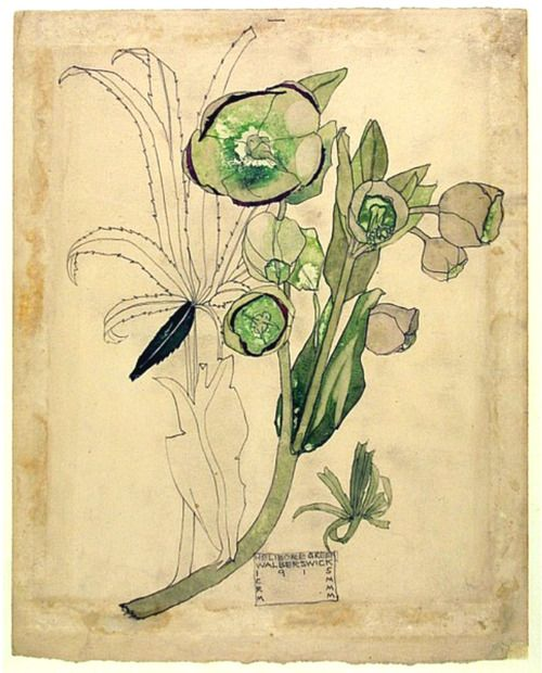 helleborus ~ Charles Rennie Mackintosh 1915