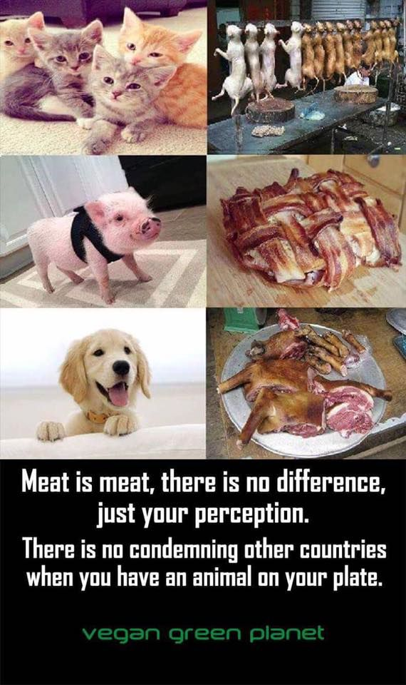 People. Do you SEE this? ARE YOU OK WITH EATING CATS AND DOGS? THEN DON'T EAT PIGS OR COWS! IT'S FUCKING DISGUSTING AND HORRIBLE OK?!