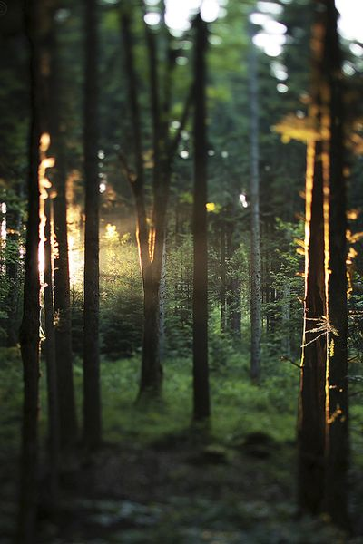 forest - photographie