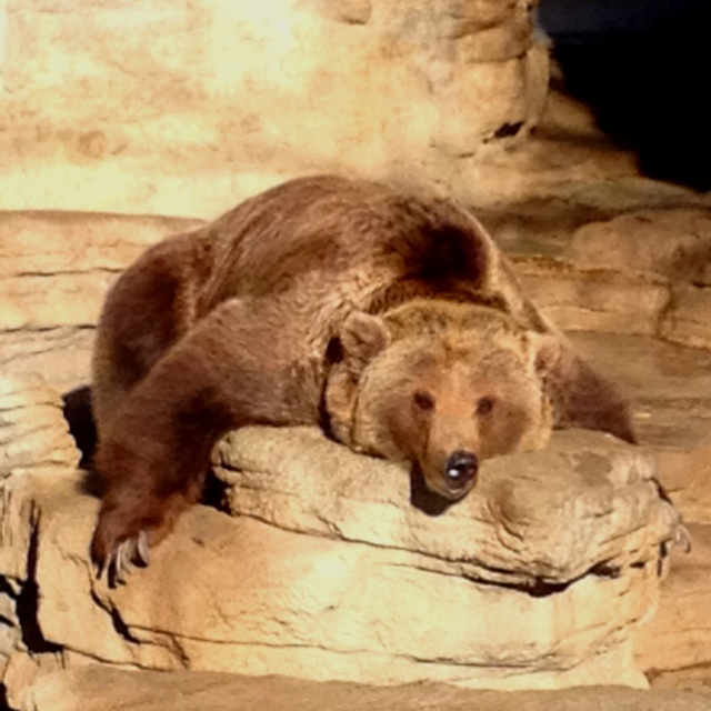 Denver Zoo Free Days: 33 Best Images About Bears On Pinterest