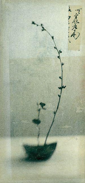ethereal flower arrangement