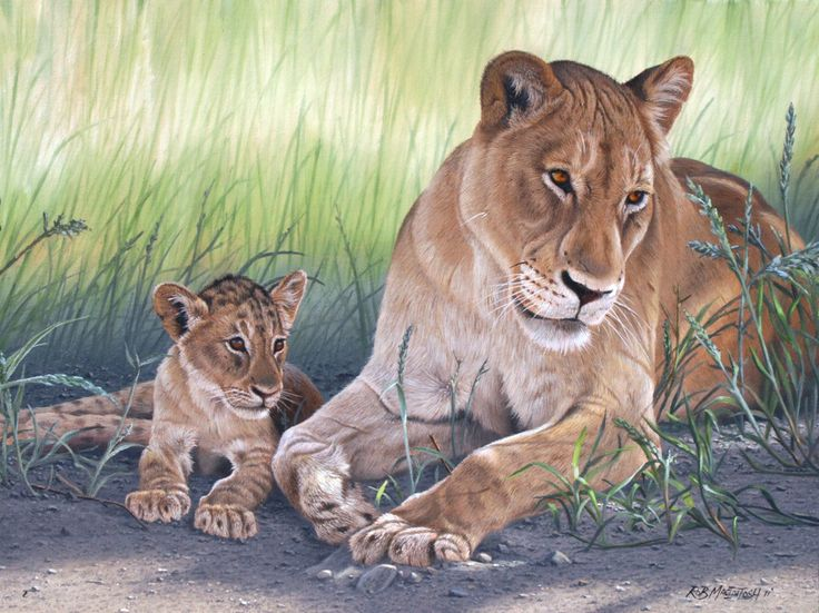 Lioness and cub painting by Rob Macintosh