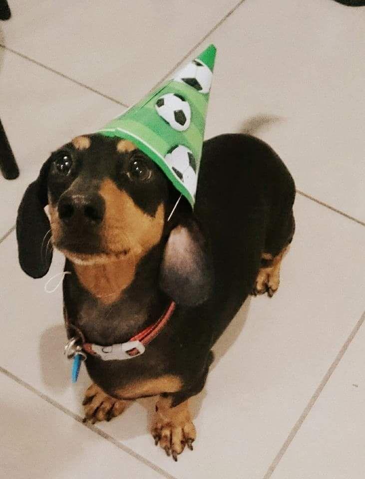 Sausage Dog Cake Decorations : 455 best Dachshund Birthdays & Cakes images on Pinterest