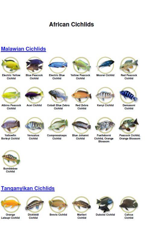 how to set up a lake malawi cichlid tank