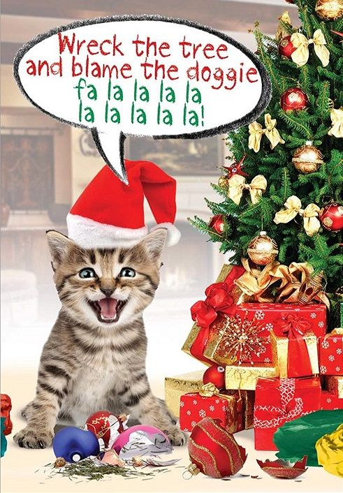 10 Cute and Funny Cat Christmas Cards Cat christmas