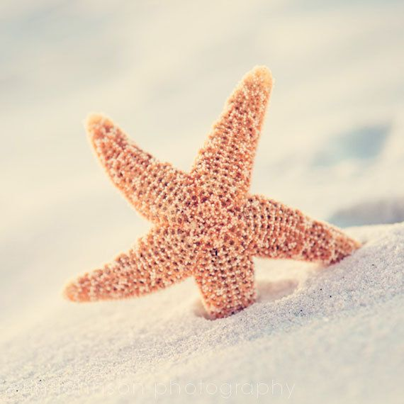 beach photography beige decor starfish art home by eireanneilis, $25.00