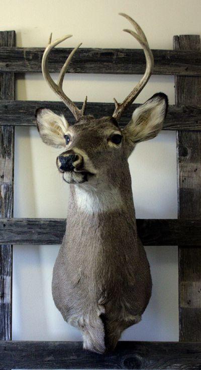 1000 Ideas About Deer Mount Decor On Pinterest Deer