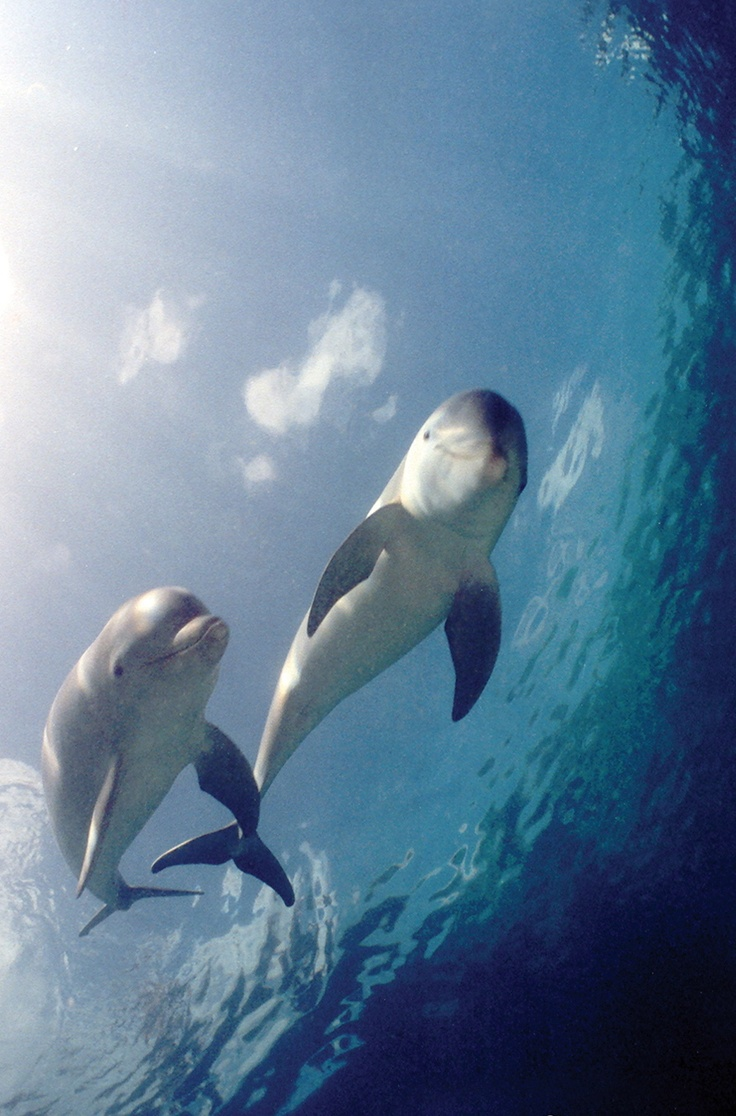 331 best dolphins images on pinterest animals dolphins and