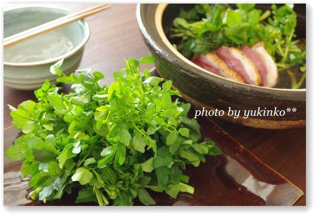 失楽園鍋 (鴨とクレソンの鍋) 平尾由希オフィシャルブログ