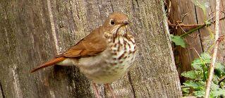 El ave con la entonación perfecta
