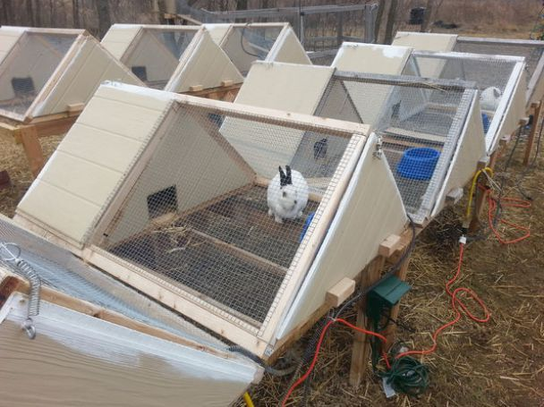 how to build a rabbit transport cage