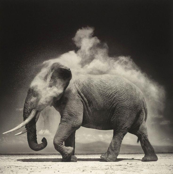 Nick Brandt ELEPHANT WITH EXPLODING DUST, AMBOSELI, 2004http://www.nickbrandt.com/portfolio.cfm?nK=7617&nS=0&i=84953